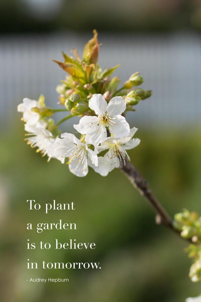 modernmonalisa_plant_a_garden