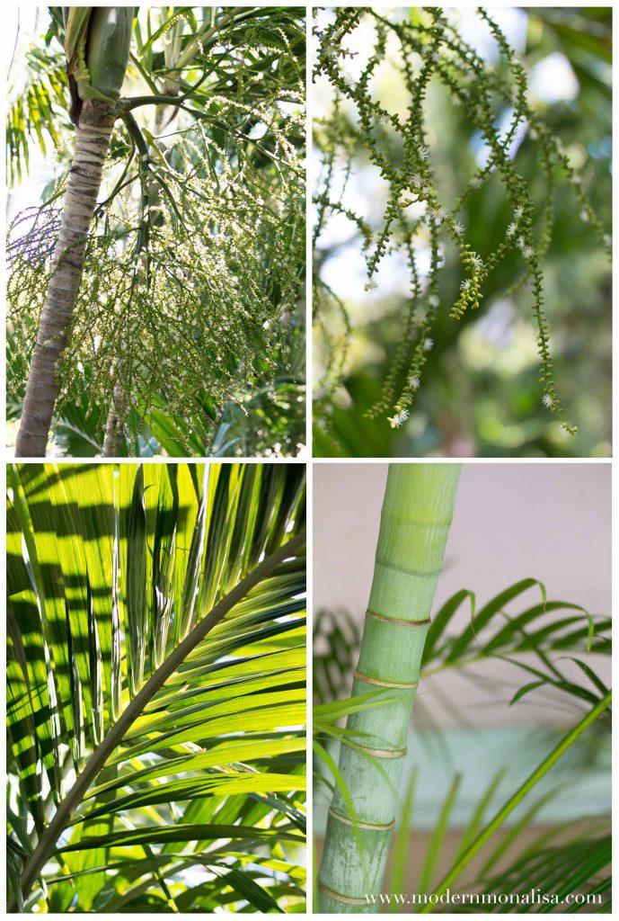 modernmonalisa_bahamas_green_collage