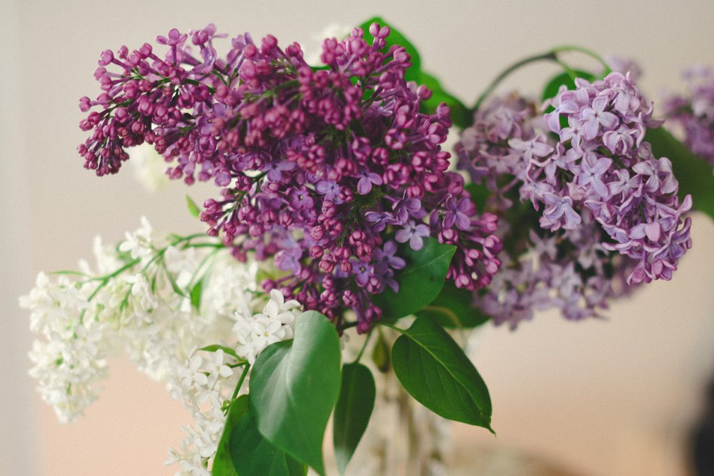 monikapayerphoto_lilacs_in_a_vase_horizontal_web